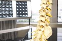 背骨のイメージ画像