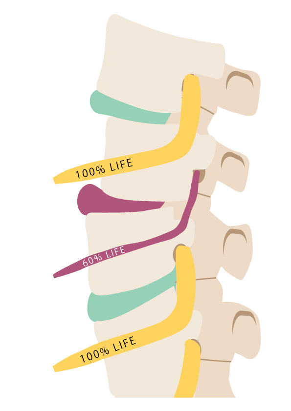 筋肉イメージ図その2